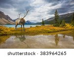 "the lush colorful ""golden... 