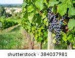 Grapes Bordeaux Wineyard At...