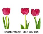 tulip flowers isolated on white ... | Shutterstock . vector #384109105