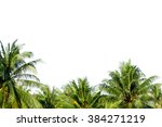 Coconut Palm Trees Against On...