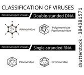 classification of viruses.... | Shutterstock .eps vector #384381571