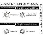 classification of viruses.... | Shutterstock .eps vector #384381571