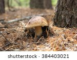 Small photo of mushroom, porcini, bun, tree, grow, brown, grass, tasty, forest