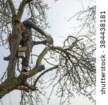 A Tree Surgeon Trimming...