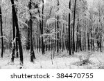 Trees And Snow In Winter