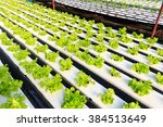 hydroponics method of growing... | Shutterstock . vector #384513649