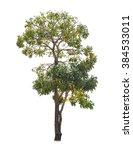 tree isolate on white background | Shutterstock . vector #384533011