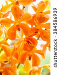 Small photo of Beautiful blossom orange vanda orchids
