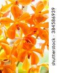 Small photo of Beautiful blossom orange vanda orchids