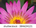 close up beautiful pink water... | Shutterstock . vector #384624121