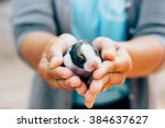 rabbit with a gift  selective... | Shutterstock . vector #384637627