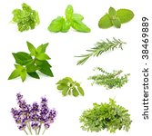 herb collection | Shutterstock . vector #38469889