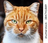 Clever Red Color Cat Portrait