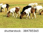 Goats Eating Grass On A Pastur...
