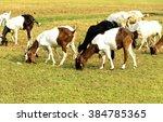 Goats Eating Grass On A Pastur...