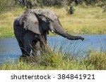 african elephant in water in... | Shutterstock . vector #384841921