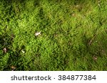 Texture Of A Forest Floor With...