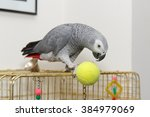 African Grey Parrot Sitting On...
