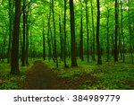 green forest and the path | Shutterstock . vector #384989779