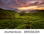 cameron highland tea plantation | Shutterstock . vector #385036204