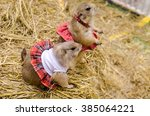 cute prairie dog dressed up on... | Shutterstock . vector #385064221