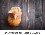 Stock photo red cat looking up sitting on the wooden background 385126291