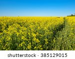 Landscape With Yellow Flowerin...
