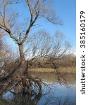 trees at the delta of danube... | Shutterstock . vector #385160179