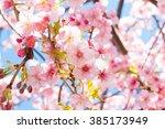 sakura of early flowering | Shutterstock . vector #385173949