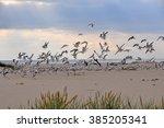 gulls in the sky  beach  baltic ... | Shutterstock . vector #385205341