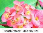 orange flower eight... | Shutterstock . vector #385209721