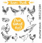 set of a hand drawn chickens ... | Shutterstock .eps vector #385212184