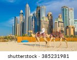 Camel In Front Of Dubai Marina...