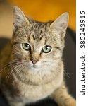 portrait of a domestic cat | Shutterstock . vector #385243915