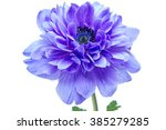 Stock photo beautiful blue flower isolated on a white background 385279285