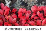 Small photo of alpine bearberry at autumn