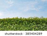 green wall. tall hedge  endless ... | Shutterstock . vector #385404289
