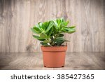Crassula Plant In The Pot On...