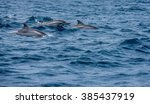 Spinner Dolphins In The Blue...