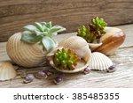 Cactus Planted In Seashells.