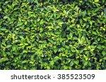 green bush leaves wall... | Shutterstock . vector #385523509