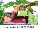 Banana Flower And Young Banana...