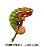 chameleon   furcifer pardalis   Shutterstock . vector #38561386