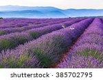 lavender field summer landscape ...   Shutterstock . vector #385702795