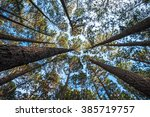 The Trees In The Pine Forest...
