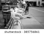 B W Seagulls Stand On A Bridge