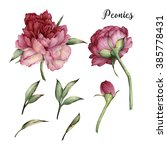 peonies and leaves  watercolor  ... | Shutterstock . vector #385778431