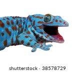 gecko lizard | Shutterstock . vector #38578729