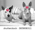 Two Podencos Hounds With Heart...