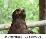 Portrait Of Steppe Eagle Over ...